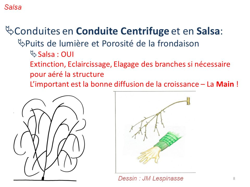 8 Salsa Conduites en Conduite Centrifuge et en Salsa: Puits de lumière et Porosité de la frondaison Salsa : OUI Extinction, Eclaircissage, Elagage des
