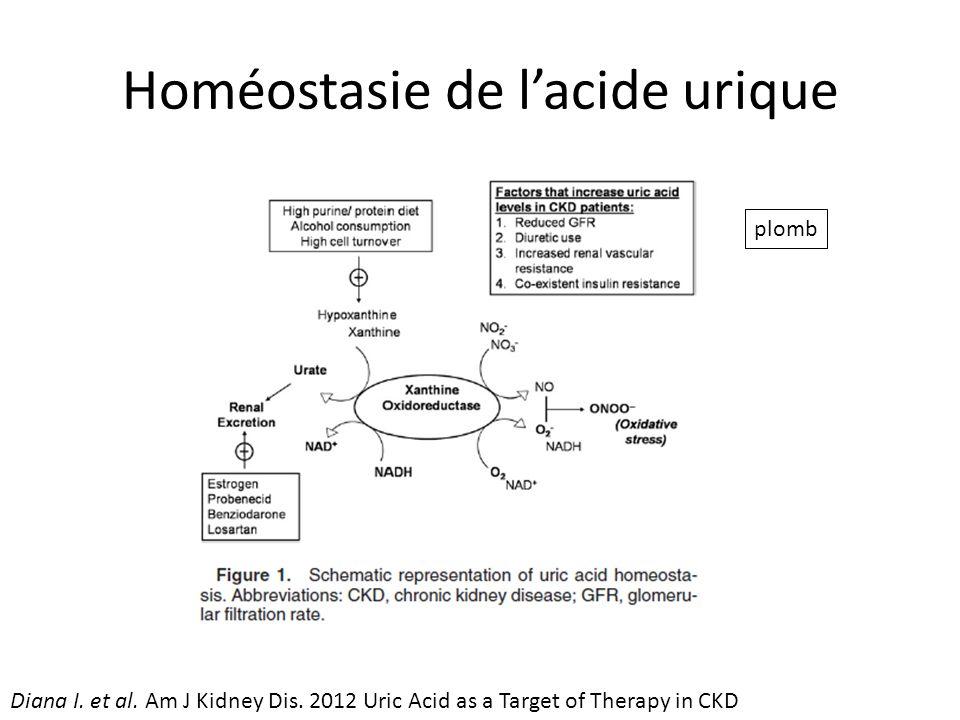 Homéostasie de lacide urique plomb Diana I.et al.