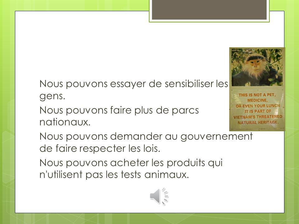 Le langur gris douc est en danger à cause de la perte de son habitat, aussi bien que les gens(le peuple) qui chassent et cela lui vendre sur le marché