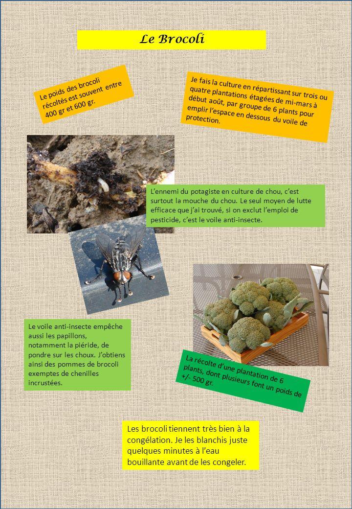Le Brocoli Je fais la culture en répartissant sur trois ou quatre plantations étagées de mi-mars à début août, par groupe de 6 plants pour emplir lesp