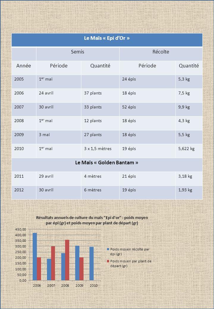 Le Maïs « Epi dOr » SemisRécolte AnnéePériodeQuantitéPériodeQuantité 20051 er mai24 épis5,3 kg 200624 avril37 plants18 épis7,5 kg 200730 avril33 plant