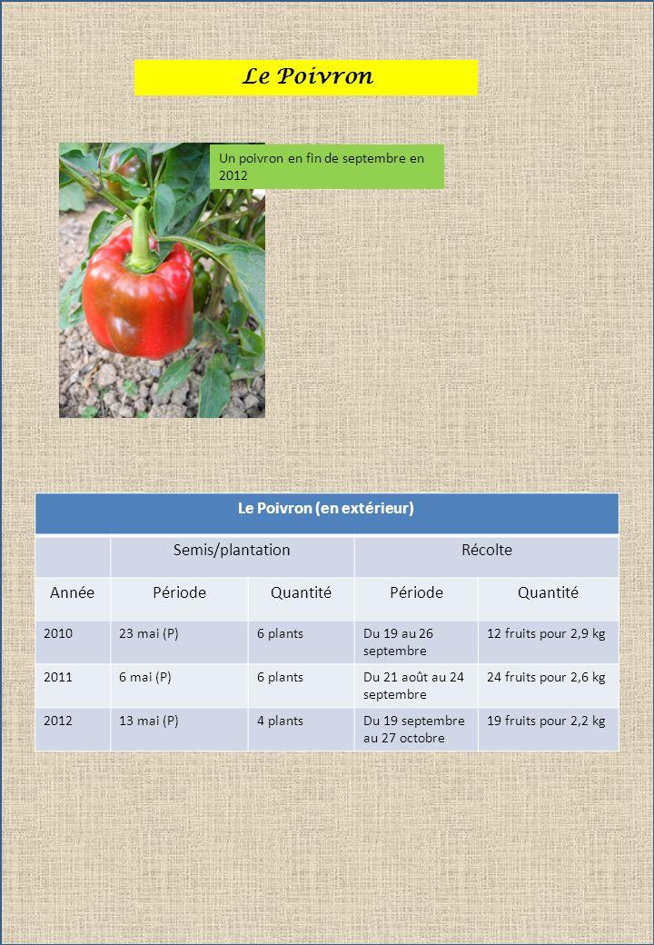 Le Poivron Un poivron en fin de septembre en 2012 Le Poivron (en extérieur) Semis/plantationRécolte AnnéePériodeQuantitéPériodeQuantité 201023 mai (P)