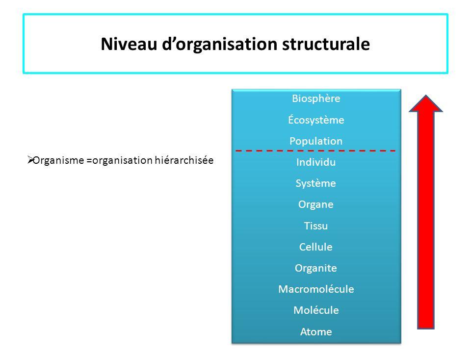 Niveau dorganisation structurale Organisme =organisation hiérarchisée Biosphère Écosystème Population Individu Système Organe Tissu Cellule Organite M