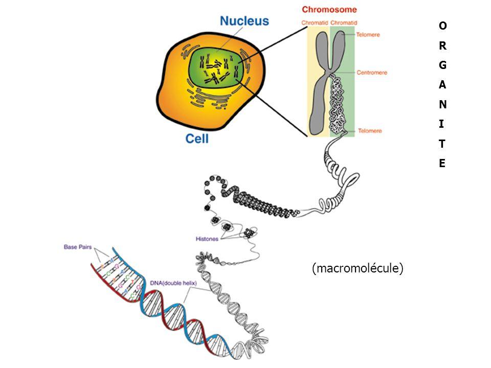 (macromolécule) ORGANITEORGANITE