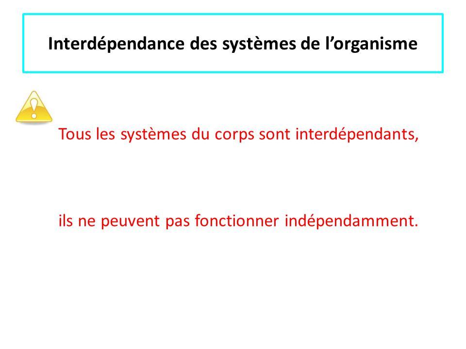 Interdépendance des systèmes de lorganisme Tous les systèmes du corps sont interdépendants, ils ne peuvent pas fonctionner indépendamment.