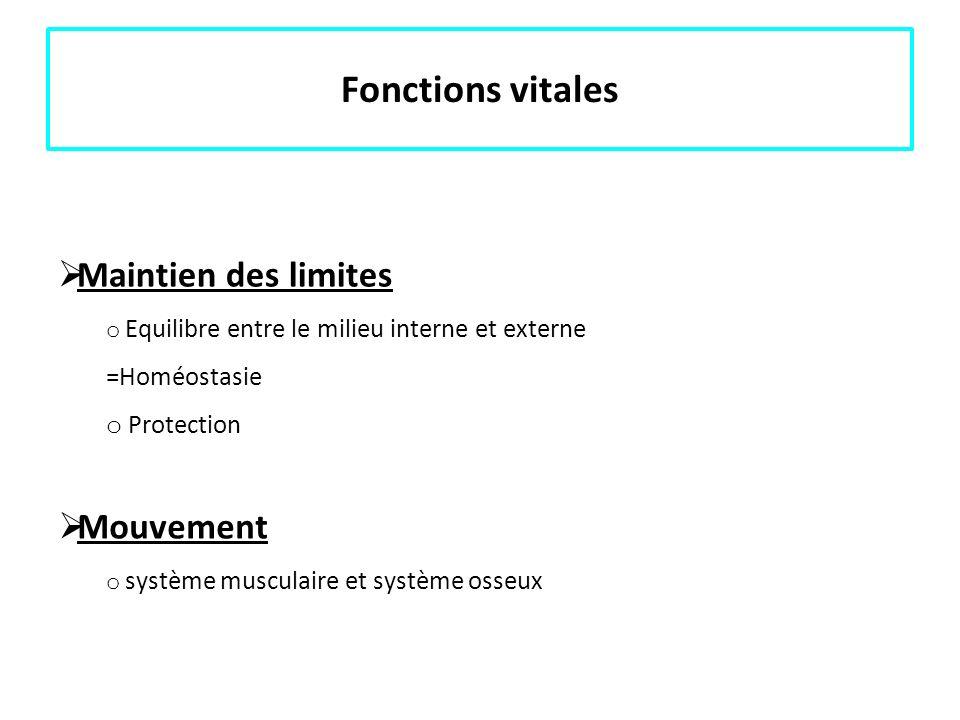 Fonctions vitales Maintien des limites o Equilibre entre le milieu interne et externe =Homéostasie o Protection Mouvement o système musculaire et syst