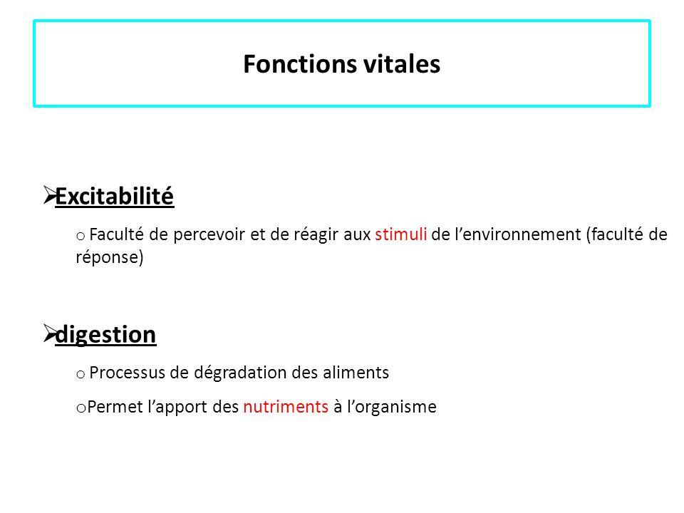 Fonctions vitales Excitabilité o Faculté de percevoir et de réagir aux stimuli de lenvironnement (faculté de réponse) digestion o Processus de dégrada