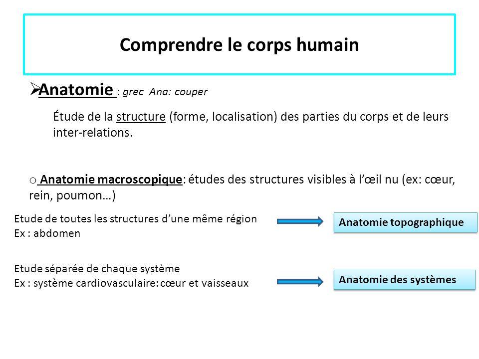 Comprendre le corps humain Anatomie : grec Ana: couper Étude de la structure (forme, localisation) des parties du corps et de leurs inter-relations. o