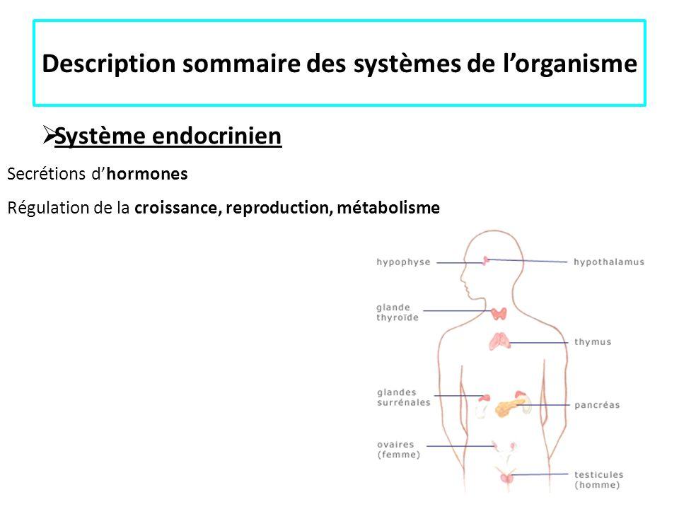 Description sommaire des systèmes de lorganisme Système endocrinien Secrétions dhormones Régulation de la croissance, reproduction, métabolisme Anatom