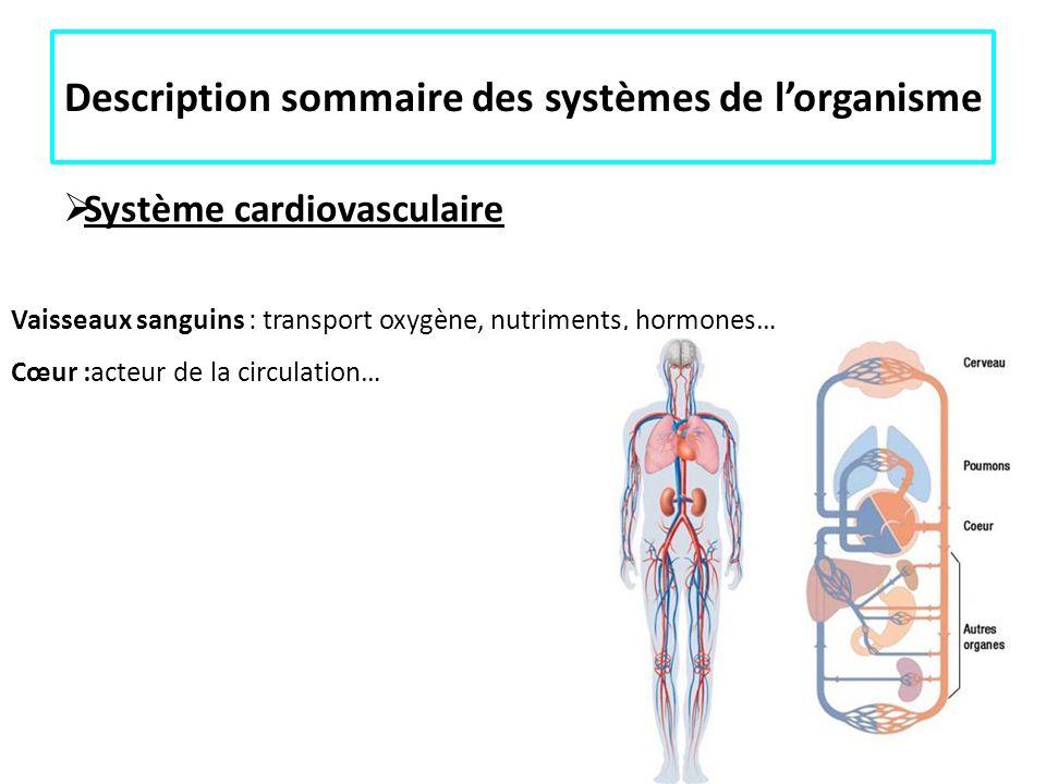 Description sommaire des systèmes de lorganisme Système cardiovasculaire Vaisseaux sanguins : transport oxygène, nutriments, hormones… Cœur :acteur de
