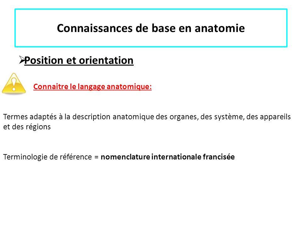 Connaissances de base en anatomie Position et orientation Connaitre le langage anatomique: Termes adaptés à la description anatomique des organes, des