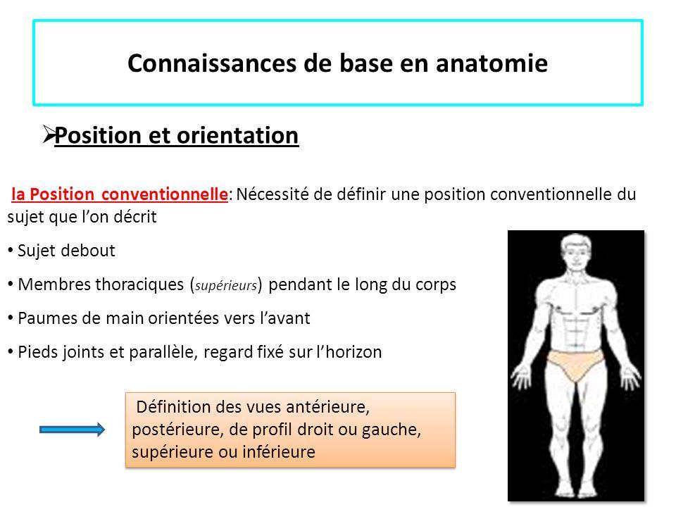 Connaissances de base en anatomie Position et orientation la Position conventionnelle: Nécessité de définir une position conventionnelle du sujet que
