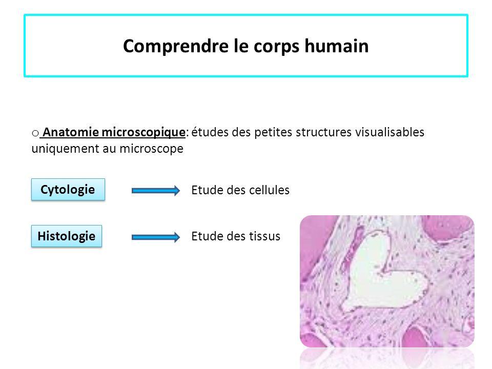 Connaissances de base en anatomie Les grandes divisions du corps humain Les cavités Cavité antérieure