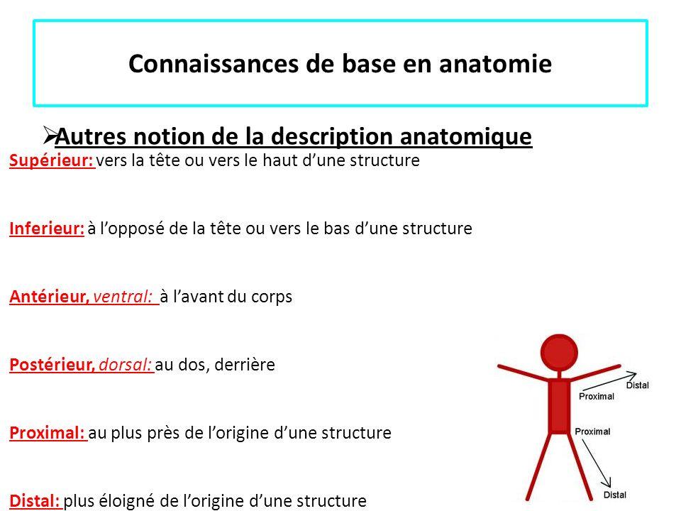 Connaissances de base en anatomie Autres notion de la description anatomique Supérieur: vers la tête ou vers le haut dune structure Inferieur: à loppo