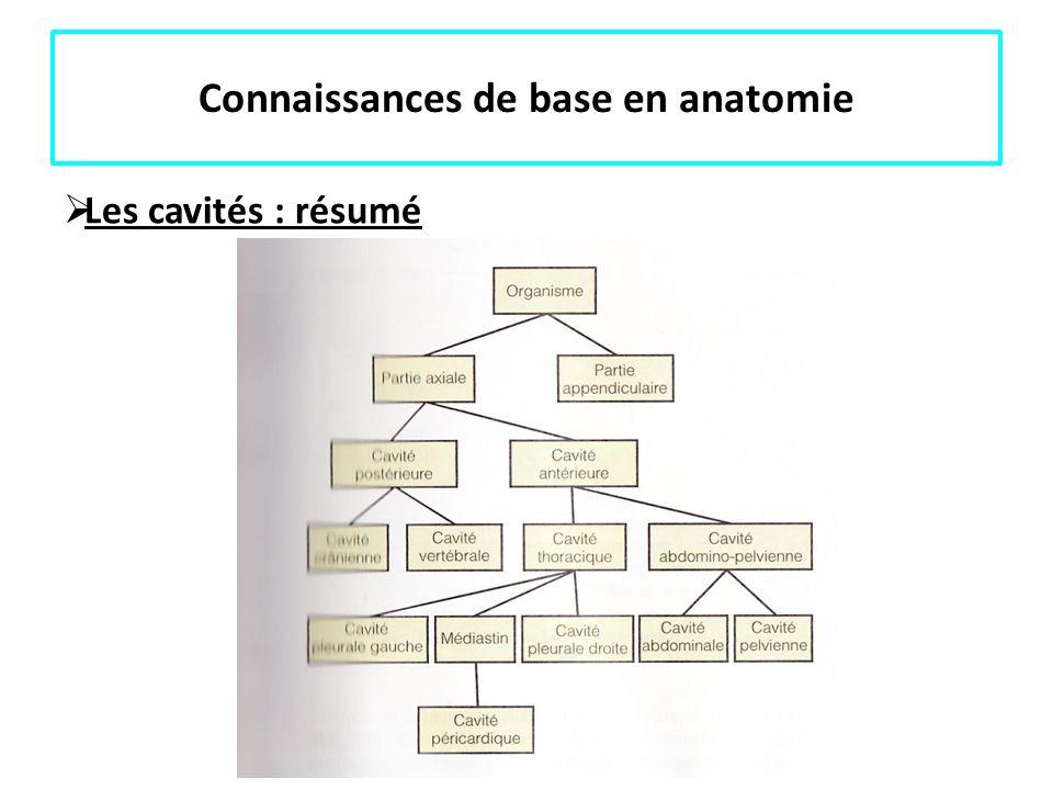 Connaissances de base en anatomie Les cavités : résumé