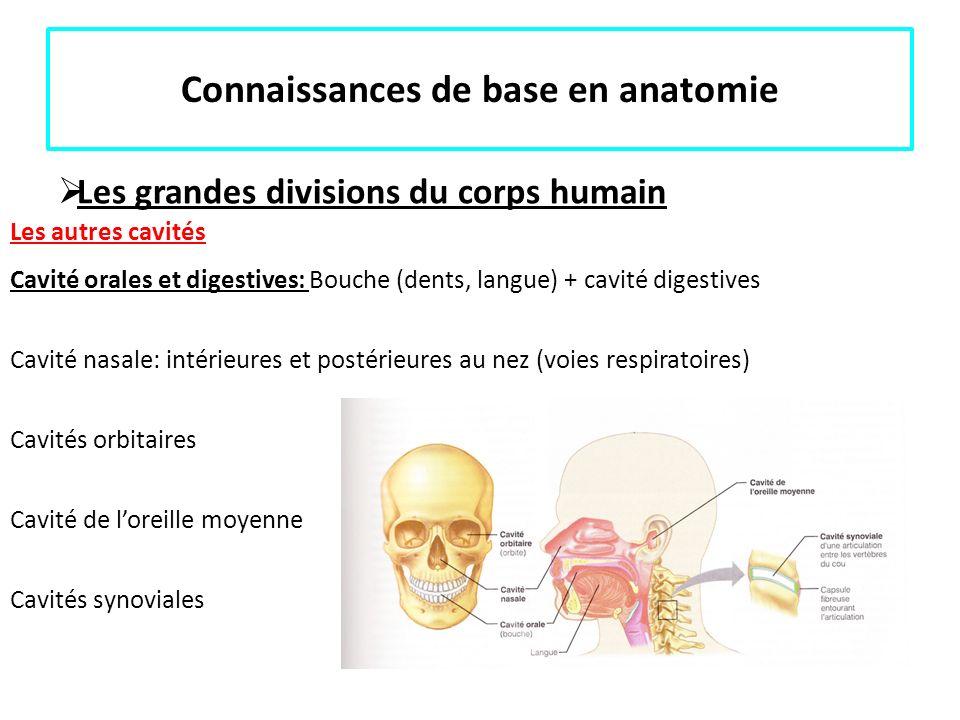 Connaissances de base en anatomie Les grandes divisions du corps humain Les autres cavités Cavité orales et digestives: Bouche (dents, langue) + cavit