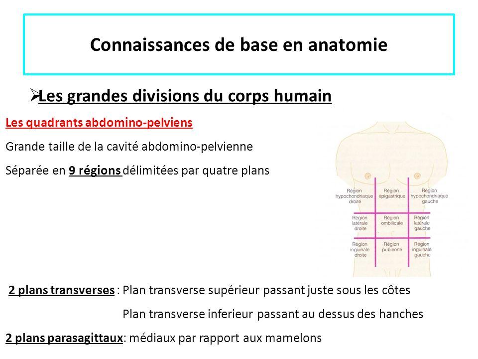 Connaissances de base en anatomie Les grandes divisions du corps humain Les quadrants abdomino-pelviens Grande taille de la cavité abdomino-pelvienne