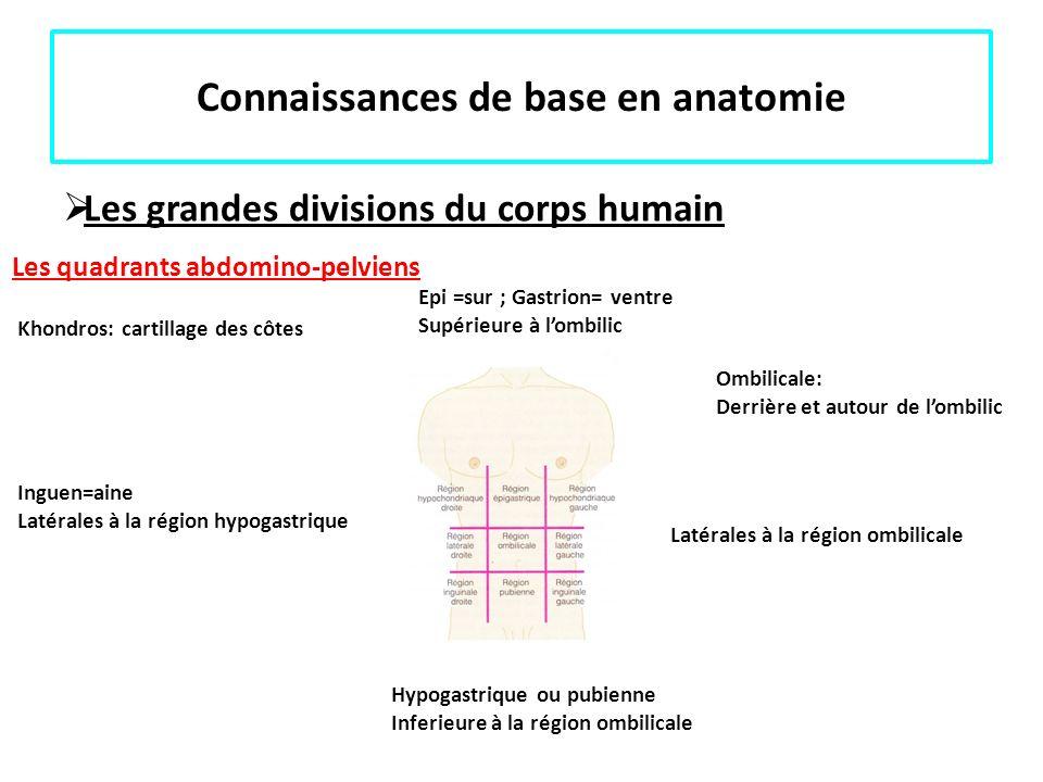 Connaissances de base en anatomie Les grandes divisions du corps humain Les quadrants abdomino-pelviens Ombilicale: Derrière et autour de lombilic Epi