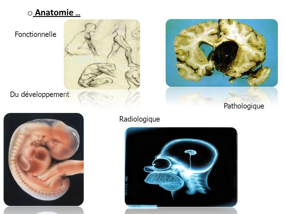 o Anatomie … Du développement Radiologique Pathologique Fonctionnelle