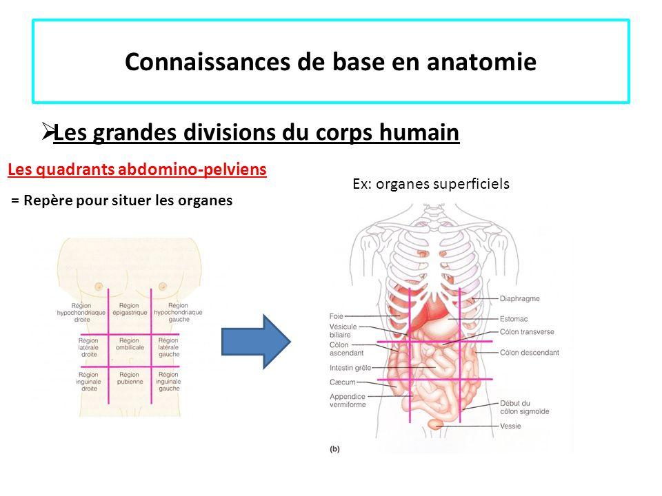 Connaissances de base en anatomie Les grandes divisions du corps humain Les quadrants abdomino-pelviens = Repère pour situer les organes Ex: organes s