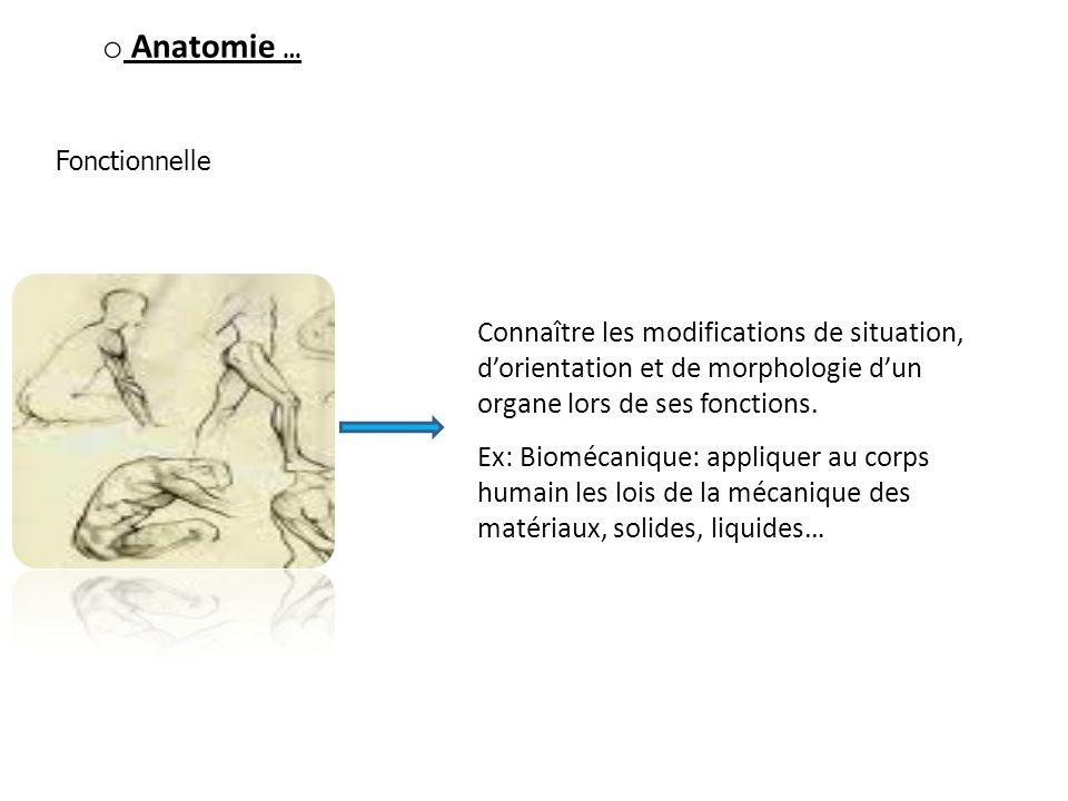 o Anatomie … Fonctionnelle Connaître les modifications de situation, dorientation et de morphologie dun organe lors de ses fonctions. Ex: Biomécanique