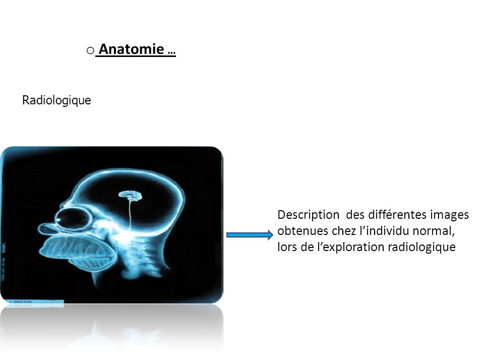 o Anatomie … Radiologique Description des différentes images obtenues chez lindividu normal, lors de lexploration radiologique