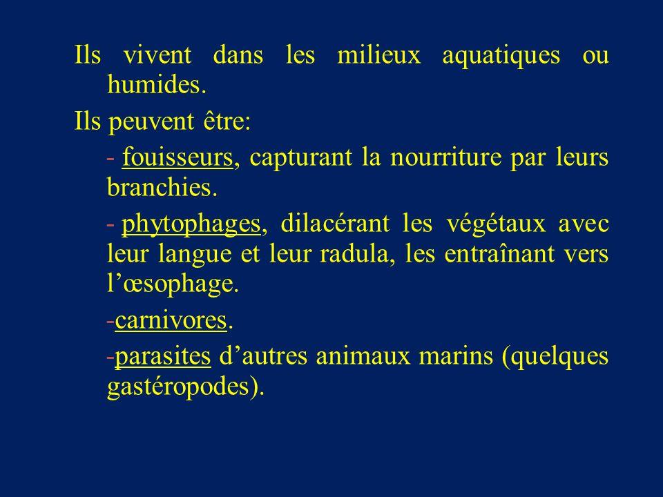Ils vivent dans les milieux aquatiques ou humides.