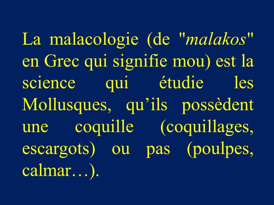 La malacologie (de malakos en Grec qui signifie mou) est la science qui étudie les Mollusques, quils possèdent une coquille (coquillages, escargots) ou pas (poulpes, calmar…).