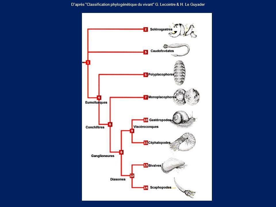 D après Classification phylogénétique du vivant G. Lecointre & H. Le Guyader