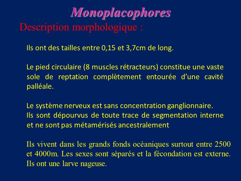 Description morphologique : Ils ont des tailles entre 0,15 et 3,7cm de long.