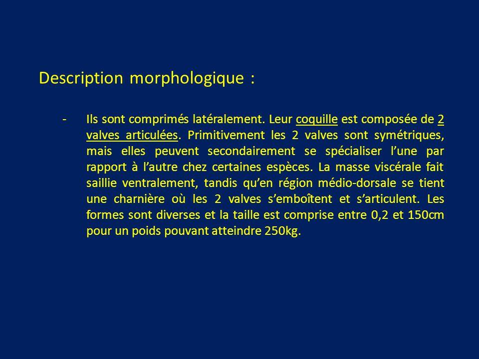Description morphologique : -Ils sont comprimés latéralement.
