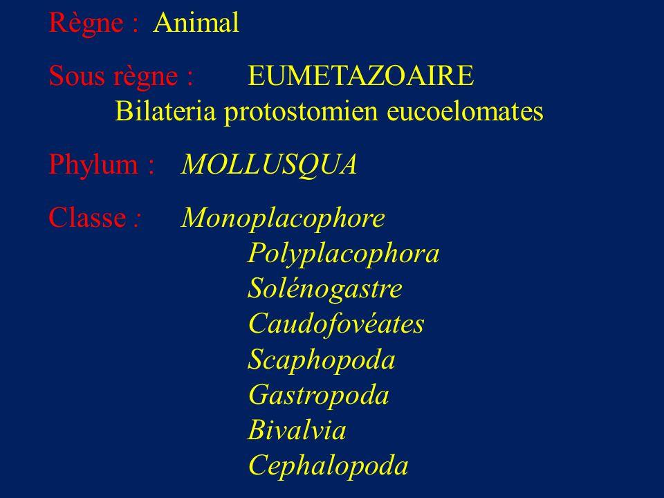 Règne : Animal Sous règne : EUMETAZOAIRE Bilateria protostomien eucoelomates Phylum : MOLLUSQUA Classe : Monoplacophore Polyplacophora Solénogastre Caudofovéates Scaphopoda Gastropoda Bivalvia Cephalopoda