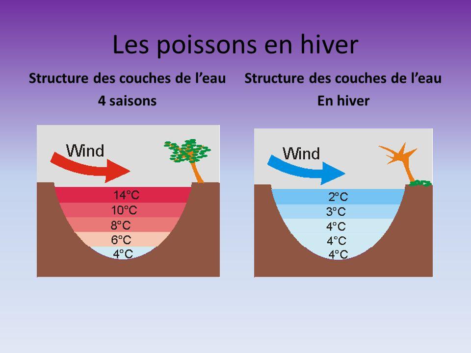 Les poissons en hiver Structure des couches de leau 4 saisons Structure des couches de leau En hiver