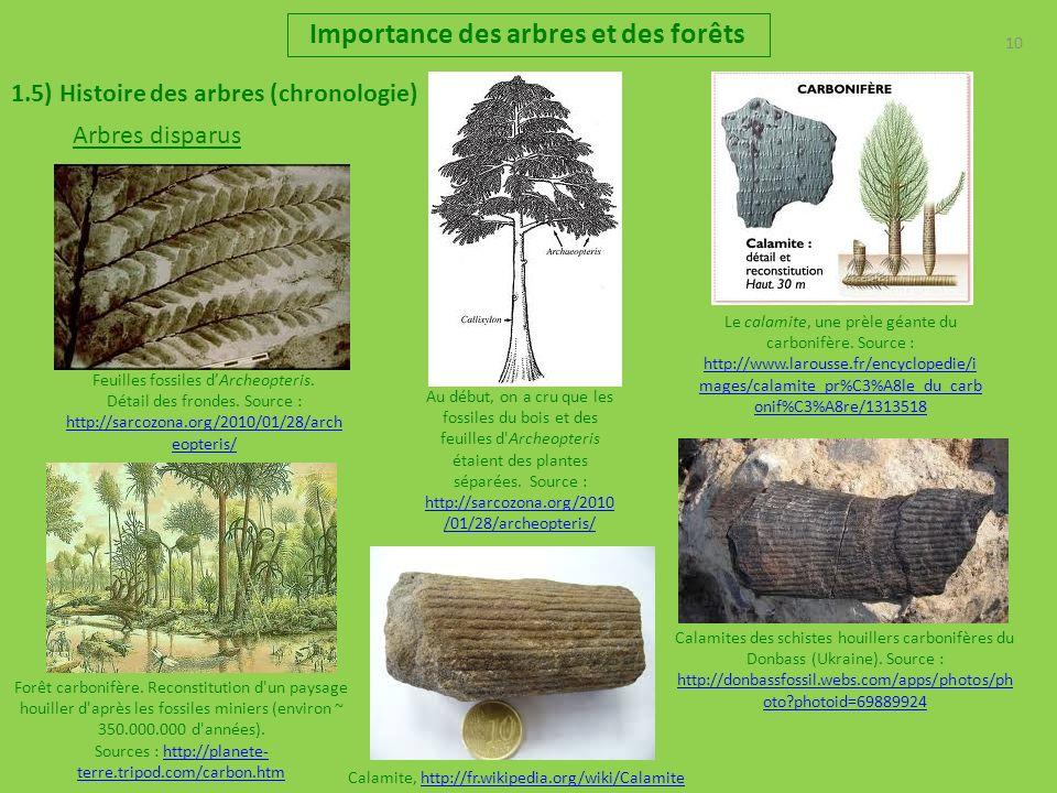 10 Importance des arbres et des forêts 1.5) Histoire des arbres (chronologie) Feuilles fossiles dArcheopteris. Détail des frondes. Source : http://sar