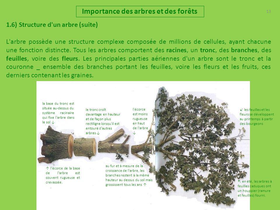 13 Importance des arbres et des forêts 1.6) Structure d'un arbre (suite) L'arbre possède une structure complexe composée de millions de cellules, ayan