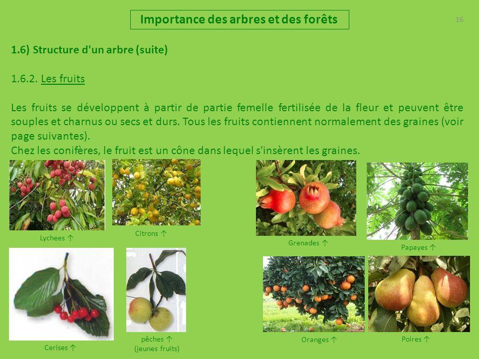 16 Importance des arbres et des forêts 1.6) Structure d'un arbre (suite) 1.6.2. Les fruits Les fruits se développent à partir de partie femelle fertil