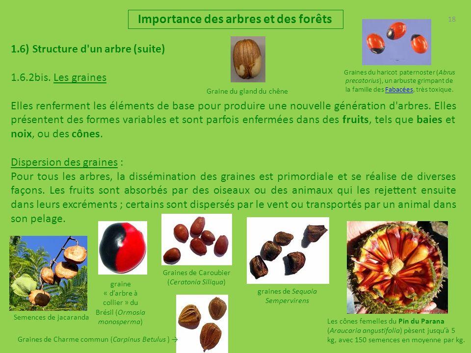 18 Importance des arbres et des forêts 1.6) Structure d'un arbre (suite) 1.6.2bis. Les graines Elles renferment les éléments de base pour produire une