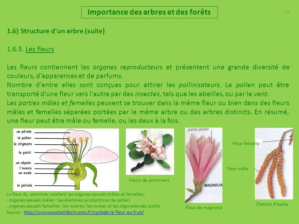 19 Importance des arbres et des forêts 1.6) Structure d'un arbre (suite) 1.6.3. Les fleurs Les fleurs contiennent les organes reproducteurs et présent
