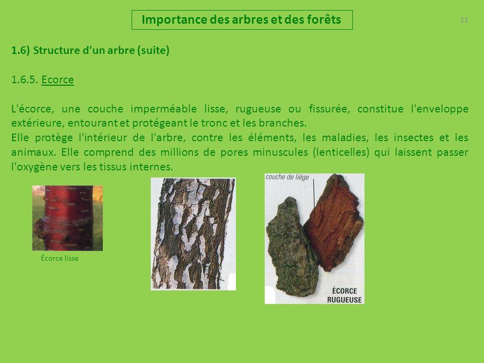 21 Importance des arbres et des forêts 1.6) Structure d'un arbre (suite) 1.6.5. Ecorce L'écorce, une couche imperméable lisse, rugueuse ou fissurée, c