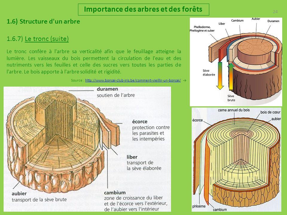 24 Importance des arbres et des forêts 1.6) Structure d'un arbre 1.6.7) Le tronc (suite) Source : http://www.bonsai-club-iris.be/comment-vieillir-un-b