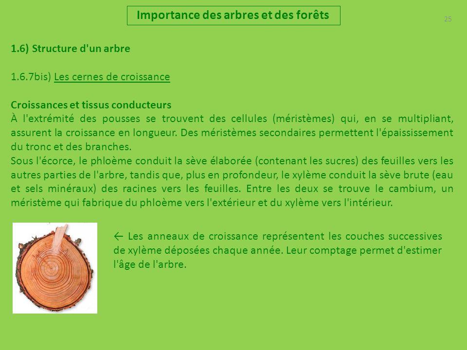 25 Importance des arbres et des forêts 1.6) Structure d'un arbre 1.6.7bis) Les cernes de croissance Croissances et tissus conducteurs À l'extrémité de