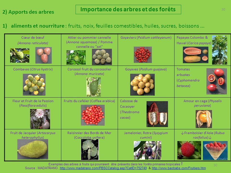 30 2) Apports des arbres 1)aliments et nourriture : fruits, noix, feuilles comestibles, huiles, sucres, boissons... Importance des arbres et des forêt