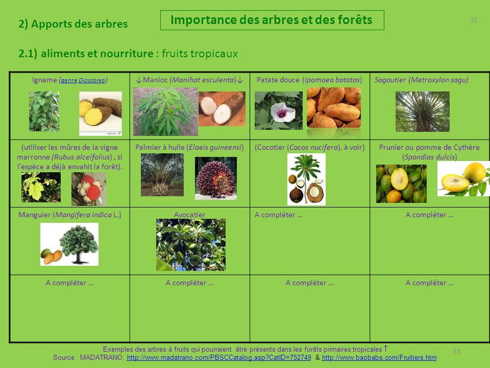 31 2) Apports des arbres 2.1) aliments et nourriture : fruits tropicaux Importance des arbres et des forêts 31 Igname ( genre Dioscorea ) genreDioscoreaManioc (Manihot esculenta)Patate douce (Ipomoea batatas)Sagoutier (Metroxylon sagu) (utiliser les mûres de la vigne marronne (Rubus alceifolius), si lespèce a déjà envahit la forêt).