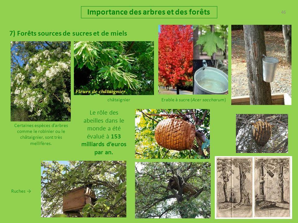 46 Importance des arbres et des forêts 7) Forêts sources de sucres et de miels Erable à sucre (Acer saccharum) Ruches Certaines espèces darbres comme