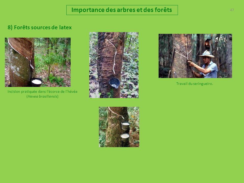 47 Importance des arbres et des forêts 8) Forêts sources de latex Travail du seringueiro. Incision pratiquée dans lécorce de lhévéa (Hevea brasiliensi
