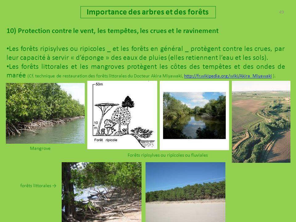 49 Importance des arbres et des forêts 10) Protection contre le vent, les tempêtes, les crues et le ravinement Les forêts ripisylves ou ripicoles _ et