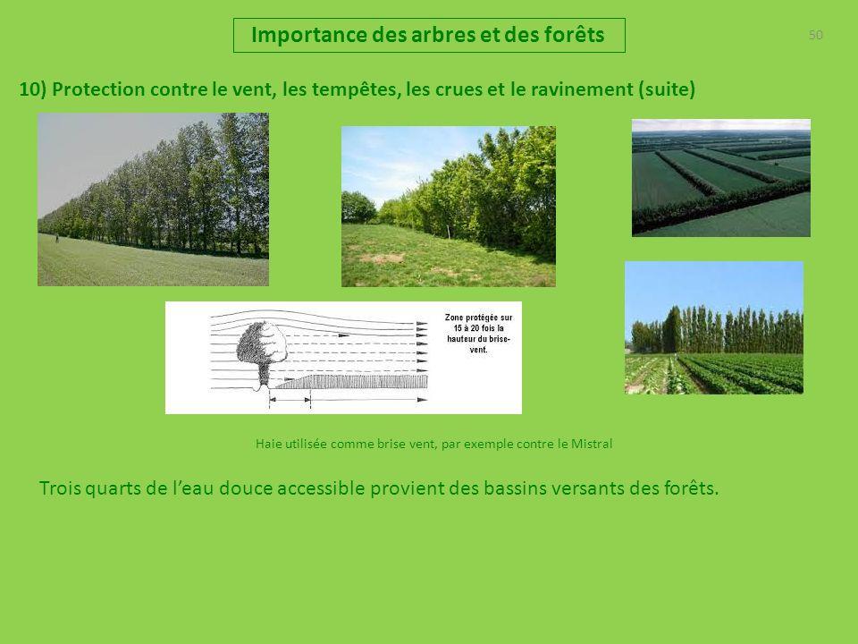 50 Importance des arbres et des forêts 10) Protection contre le vent, les tempêtes, les crues et le ravinement (suite) Haie utilisée comme brise vent,