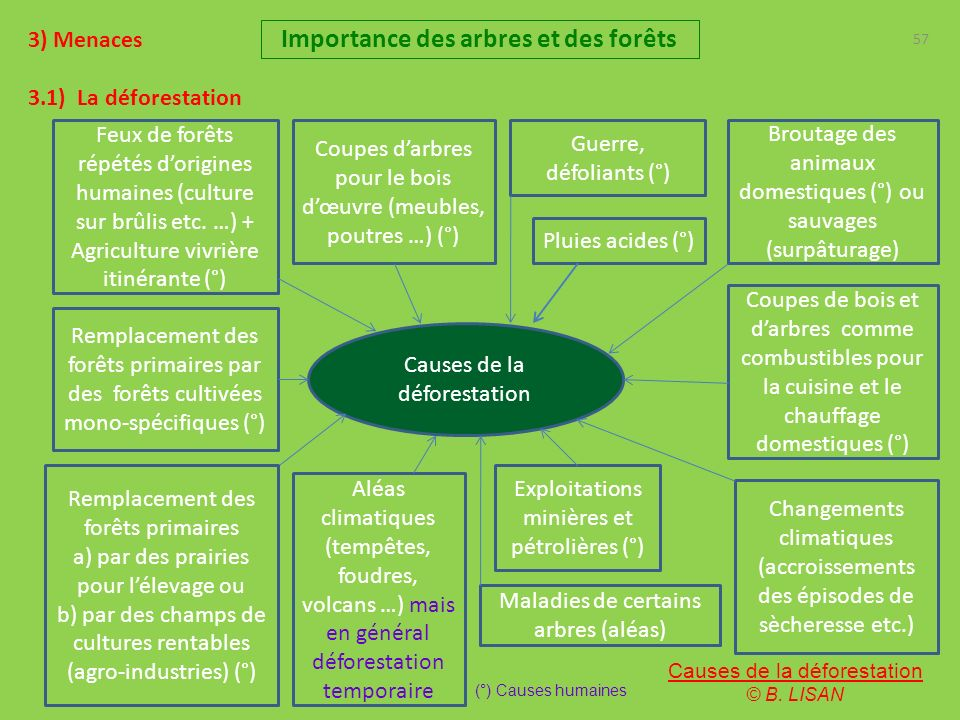 57 3) Menaces 3.1) La déforestation Importance des arbres et des forêts Causes de la déforestation Feux de forêts répétés dorigines humaines (culture