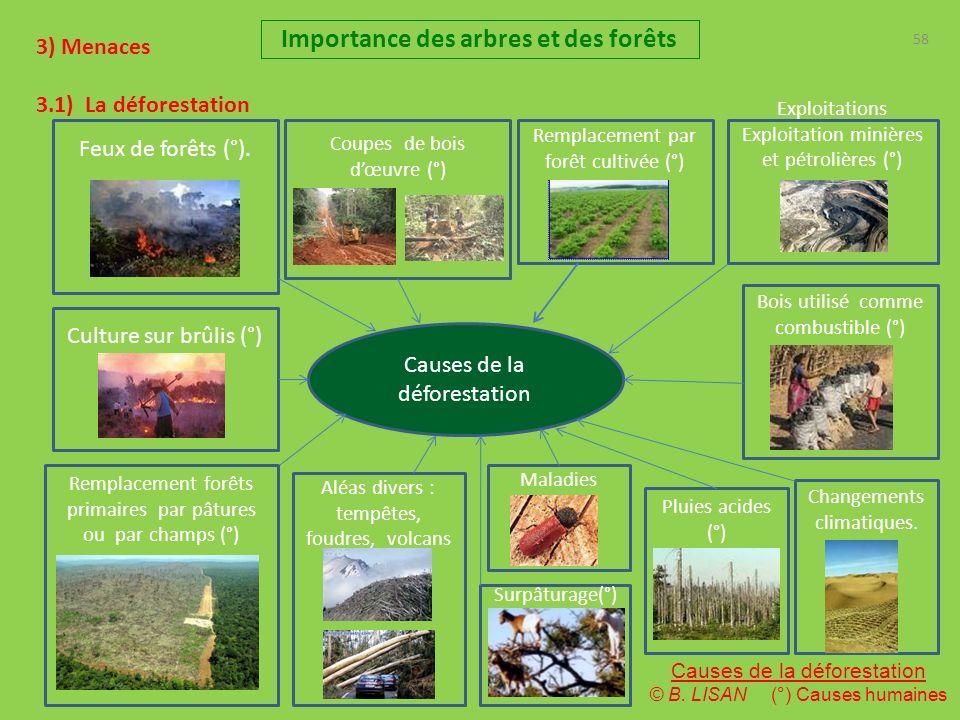 58 Importance des arbres et des forêts 3) Menaces 3.1) La déforestation Causes de la déforestation Feux de forêts (°). Bois utilisé comme combustible