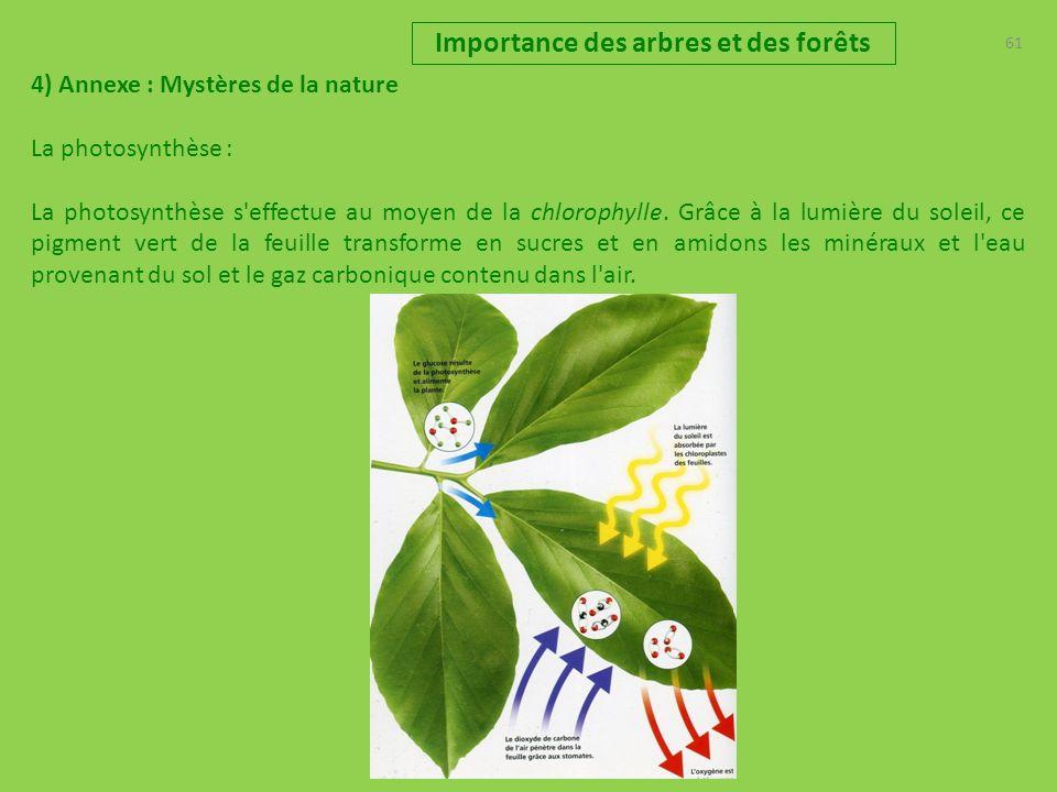 61 Importance des arbres et des forêts 4) Annexe : Mystères de la nature La photosynthèse : La photosynthèse s effectue au moyen de la chlorophylle.